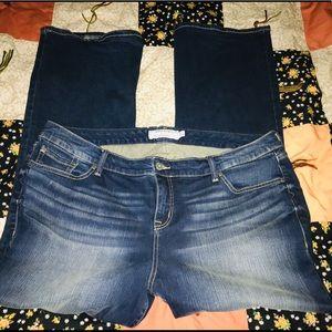 Torid woman's Jeans
